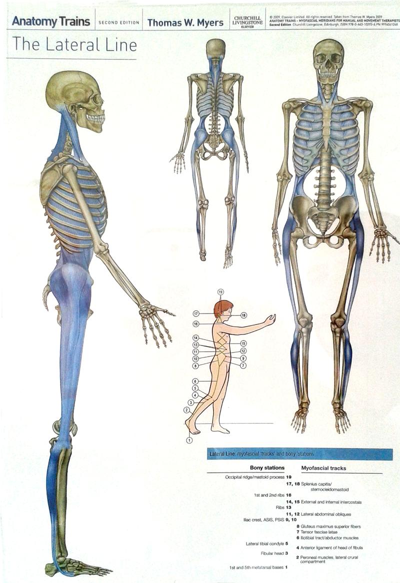 Studio C2 - studio di Chiropratica, Osteopatia, Ortopedia, Massofisioterapia a Caronno Pertusella, Como